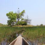 Mokoro und Fischadler